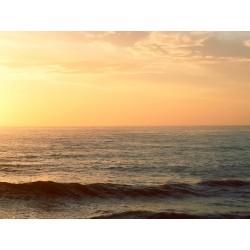 Ocean 14