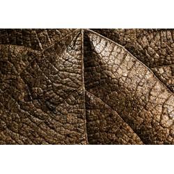 Foliage Textured 5