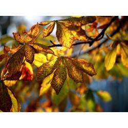 Leaves 7