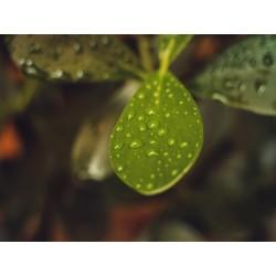Leaves 13