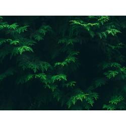 Leaves 16