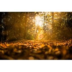 Fall Trees 5