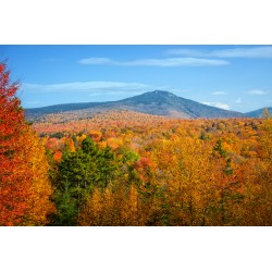 Fall Trees 6