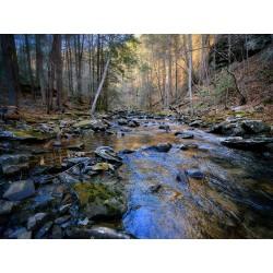 Stinging Fork Creek 2