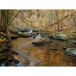 Stinging Fork Creek 3