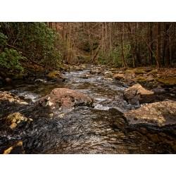 Stinging Fork Creek 4