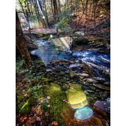 Stinging Fork Creek 5