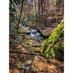 Stinging Fork Creek 6
