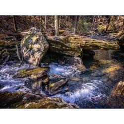 Stinging Fork Creek 7