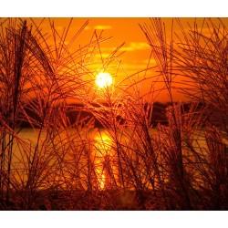Sunset Lake 3