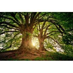 Trees 80