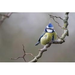 Bird 53