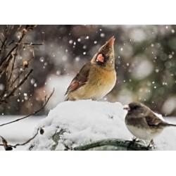 Bird 64