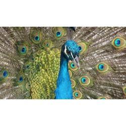 Bird 26