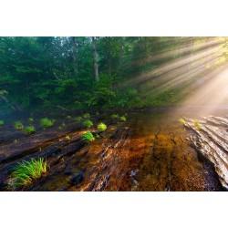 Hiwassee Morning Rays