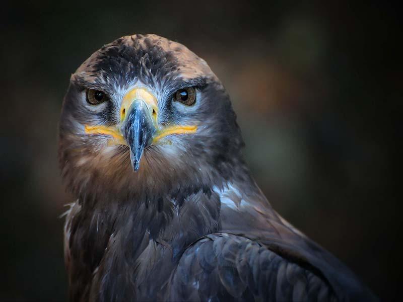 Birds/Wildlife/Animals